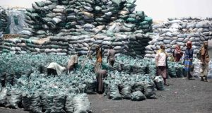 Somalia charcoal trade  Association describes charcoal as 'untapped goldmine' Somalia charcoal trade e1525722876901