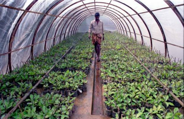 Greenhouse farming  Farmers urged to adopt greenhouse farming Greenhouse farming