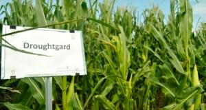 DroughtGard