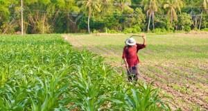 Farmland in Thailand Southeast Asia