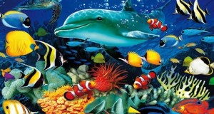Marine wildlife