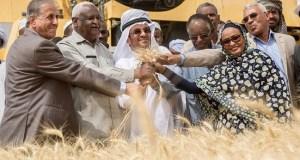 Sudanese farmers