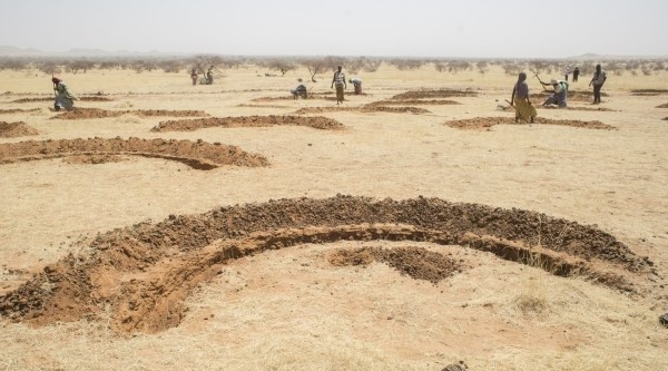 FAO land restoration