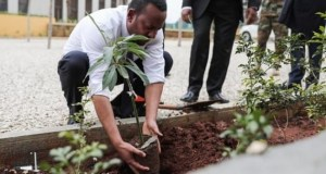 Ethiopia tree planting