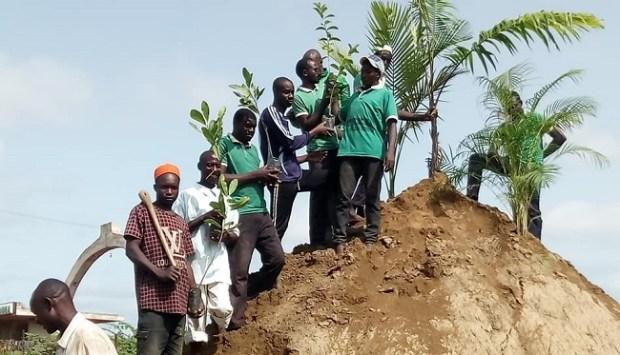 Teku Farm   Climate change: Farm embarks on planting heat-resistant trees Farm