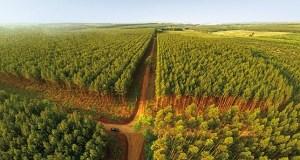 Forest plantation