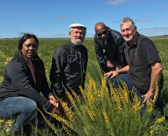Murdoch University   Scientific innovation may turn Australia's arid land into green pasture 7919521fb3412b196650e72ebb6005c9