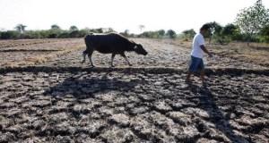 El Niño drought