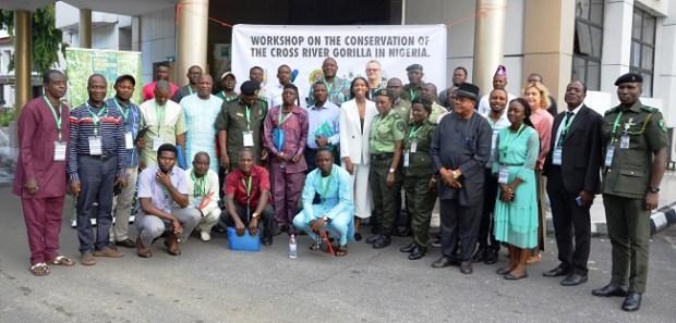 Gorilla  Conservationists draft fresh action plan to save threatened Cross River gorilla DSC 3871