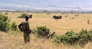 Kenya wildlife sanctuary  COVID-19: Acting against illegal wildlife trade in Africa Kenya wildlife sanctuary