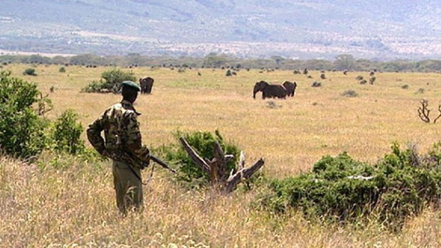 Kenya wildlife sanctuary  Kenya launches reforestation drive in wildlife sanctuaries Kenya wildlife sanctuary