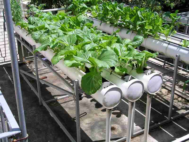 Image Result For What Kind Of Soil To Use For Container Vegetable Gardens