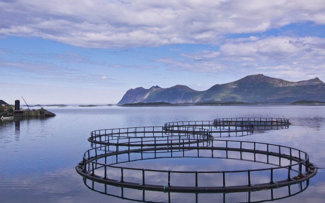 Shellfish Are the Model for Sustainable Aquaculture