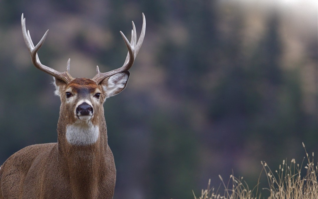 U.S. Fish and Wildlife Still Strong After 142 Years