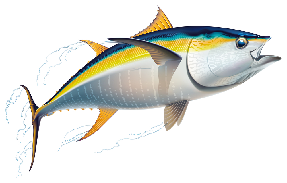 Yellowfin Tuna May Become Poisonous as Mercury Levels Rise