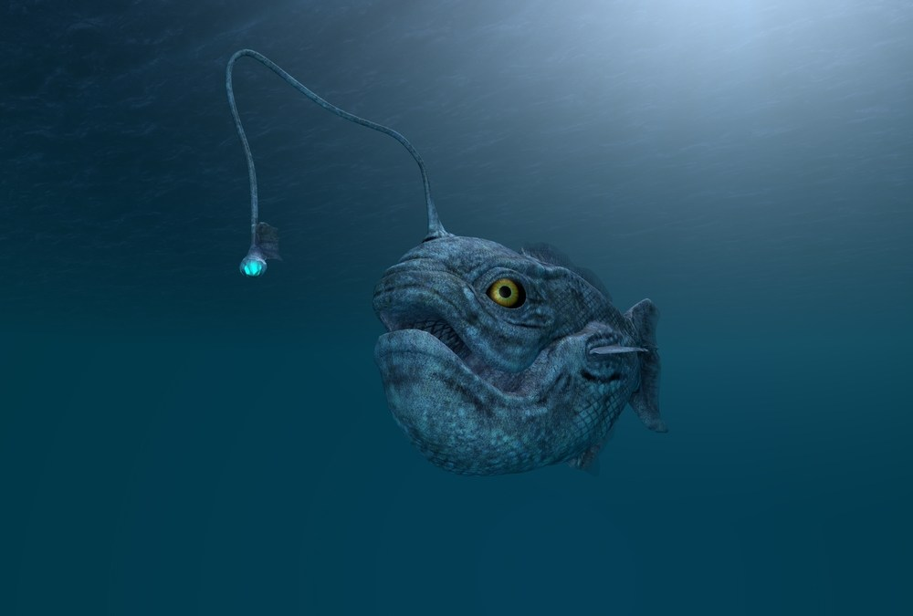 Researchers Discover New Anglerfish Species