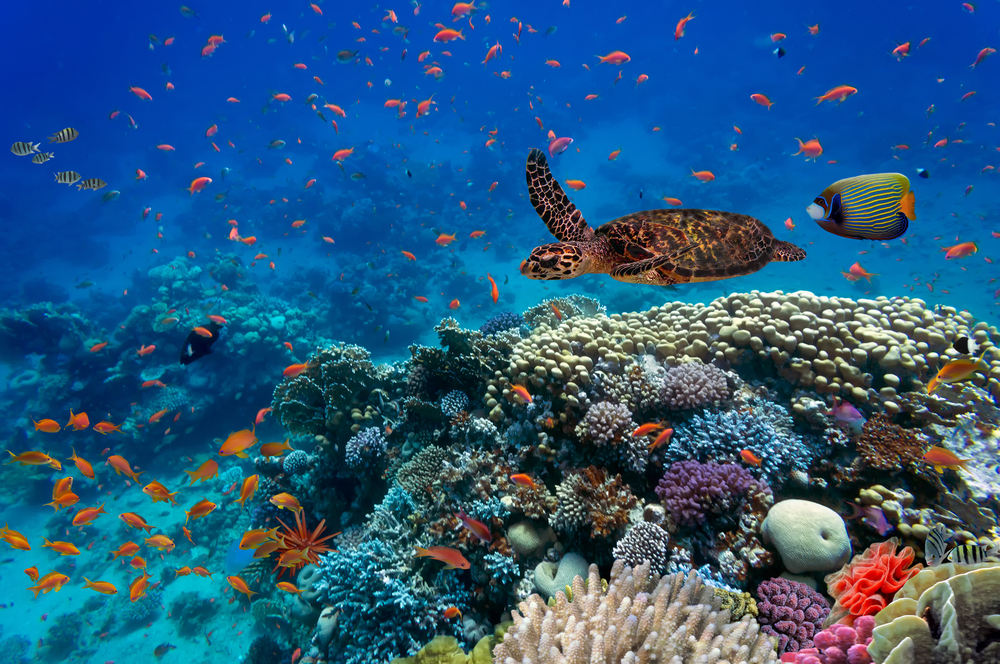 Rising Oceans Temperatures Threaten Global Biodiversity