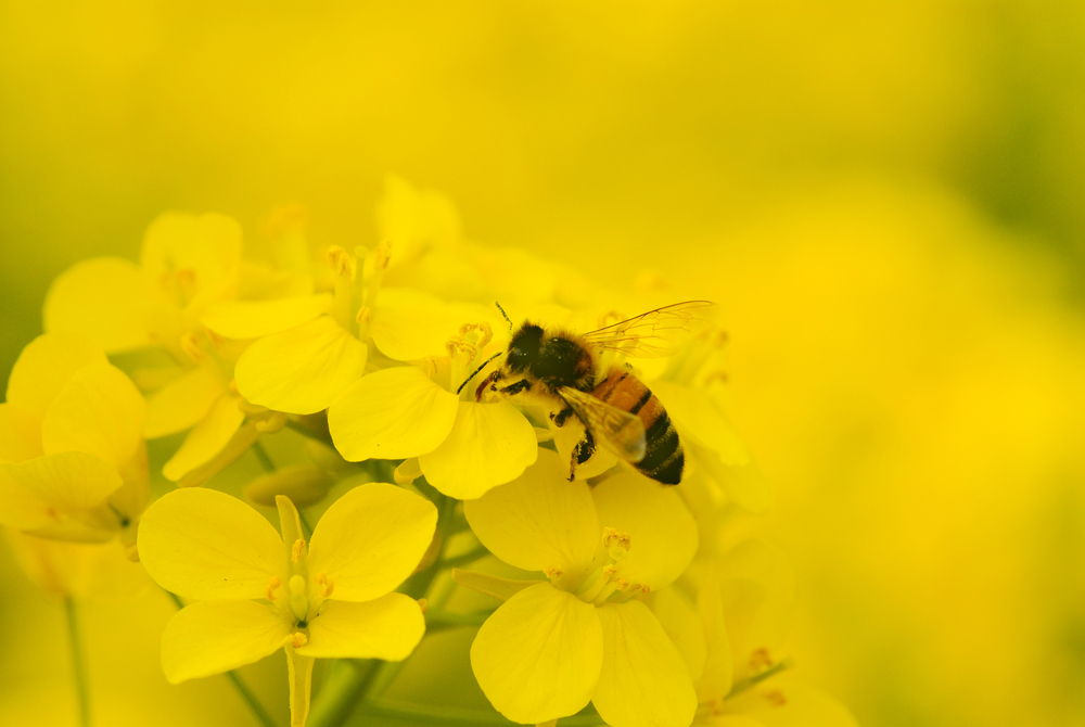 New Study Finds that Climate Change Impacts Flower Populations, Bee Tongues