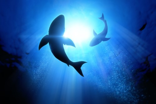 Sharks could help combat climate change