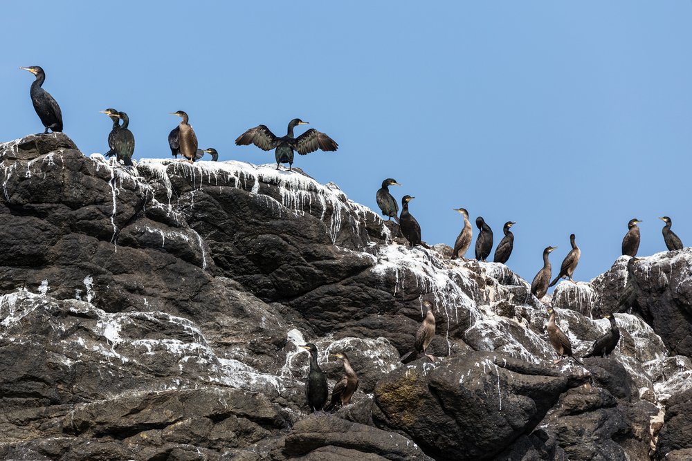 Seabird Guano Contributes to Arctic Clouds