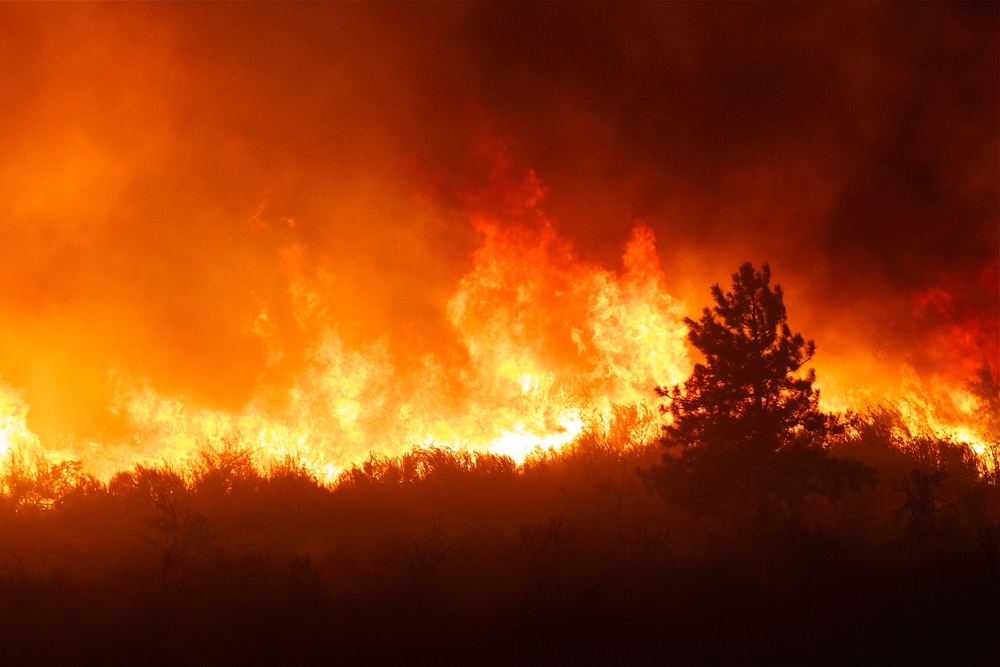 We need to adapt to wildfires, because they are becoming as inevitable as floods and droughts.