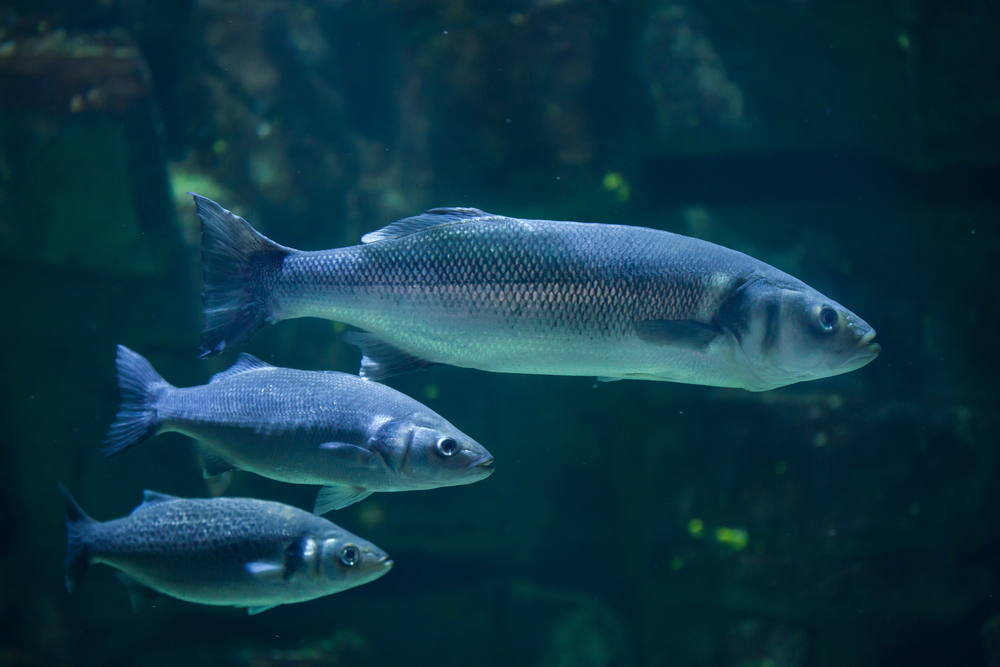 Noise Pollution Is Stressing Fish Out