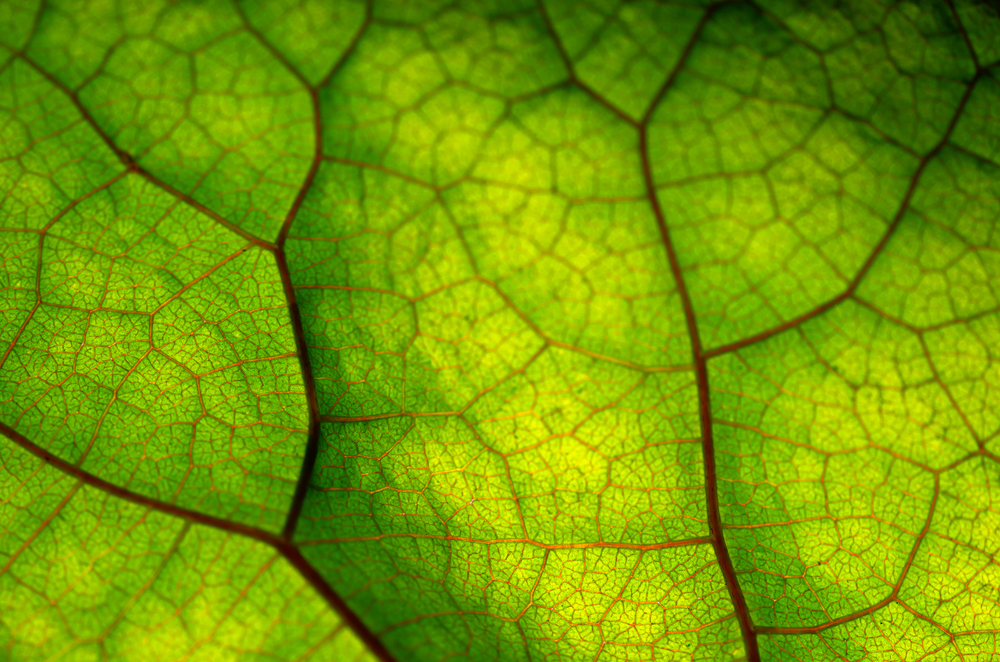 Scientists Show How Humans Shaped the Way Plants Breathe