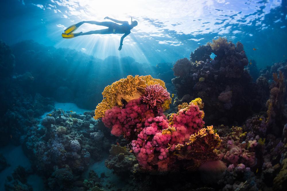 Can Corals Help Their Offspring Survive Warming Oceans?