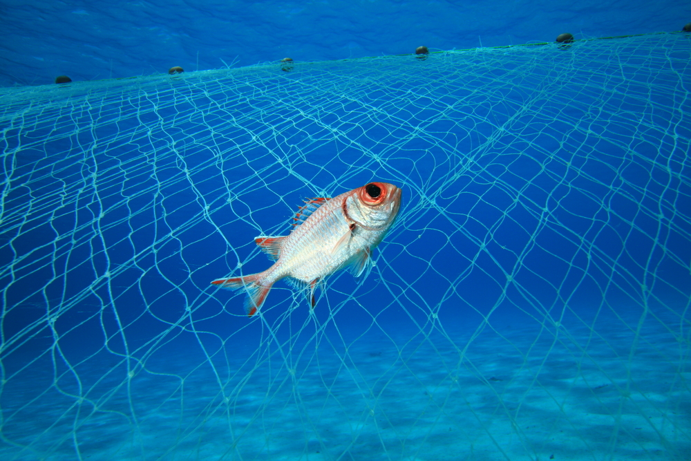 On July 23, 2020, a bipartisan bill was passed in the U.S. Senate to ban the use of drift gillnets in swordfish or shark fishing.