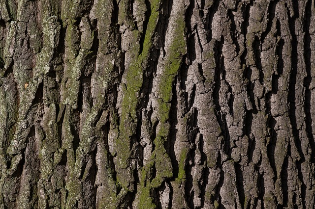 Close up image of tree bark