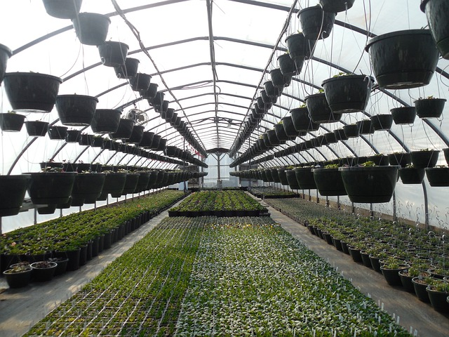 Greenhouse with Plants Hanging from the Roof