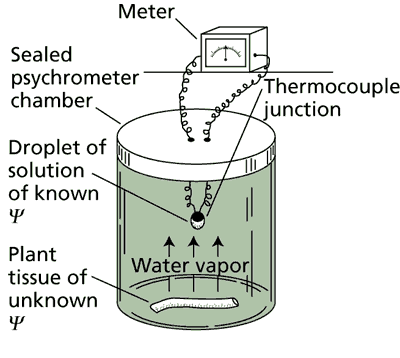 Diagram of isopiestic psychrometer used to measure the water potential of plant tissue.
