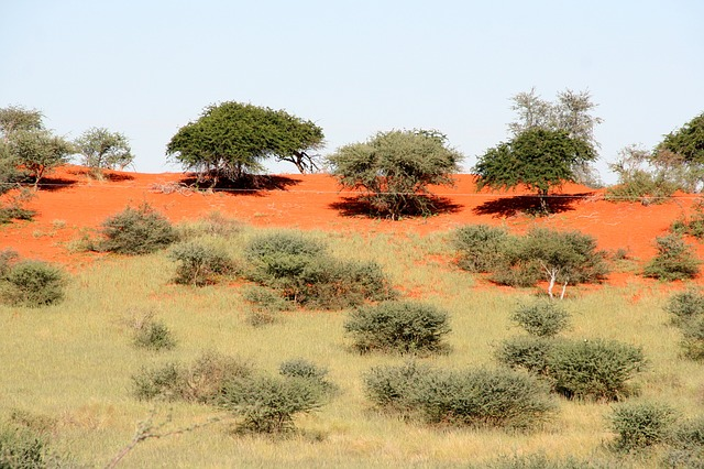 Red soil in the desert with trees and brush around