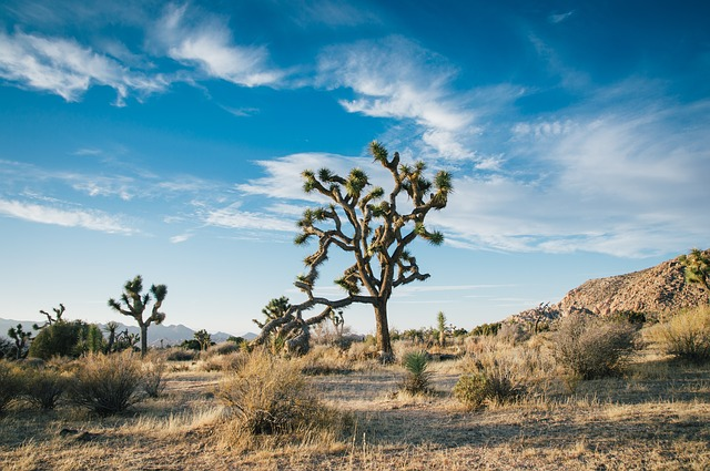 Image of a tree in the desert