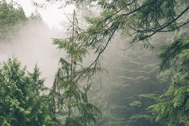 Average Relative Humidity