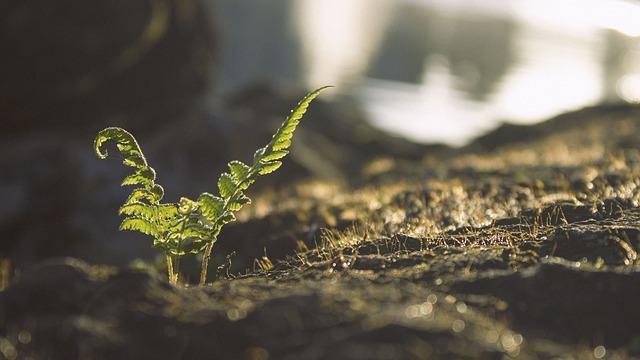 Soil moisture release curve