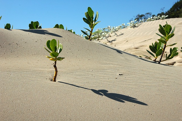 Plants sprouting out of the sand