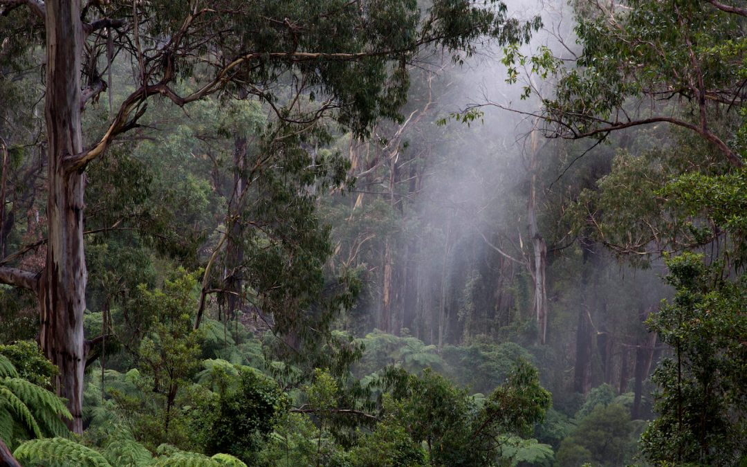 UNDERSTOREY:  Film screening and discussion, Canberra, 3 July 2018
