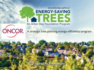 Arbor Day Foundation Environment Energy Leader