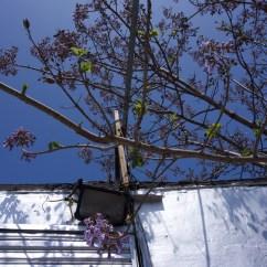 Outside Empire tree :neighbor