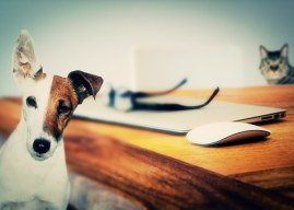 Animali in ufficio: un vantaggio per dipendenti e aziende