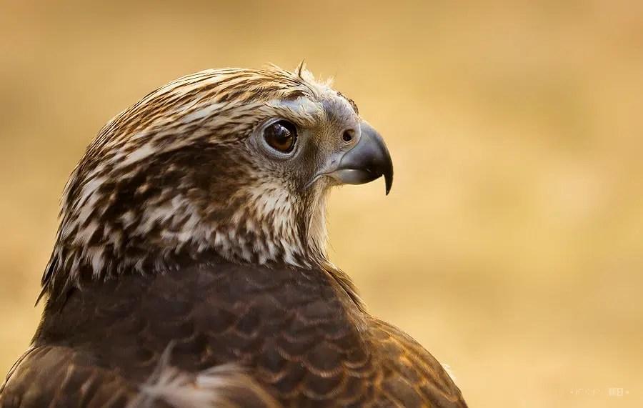 Une espèce d'oiseau sur cinq menacée d'extinction en Europe