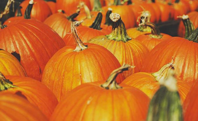 pumpkin, pumpkin power