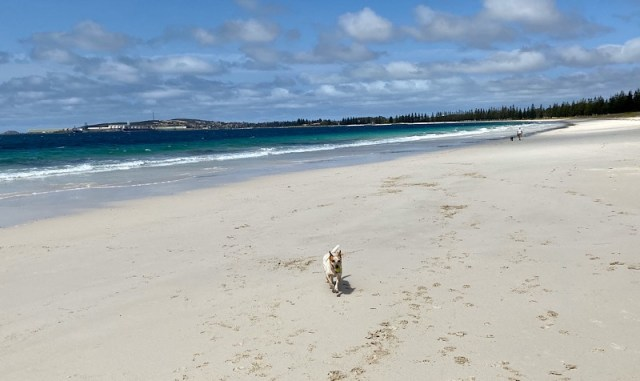 Dog friendly beach at Castletown, Esperance near Bathers Paradise Caravan Park