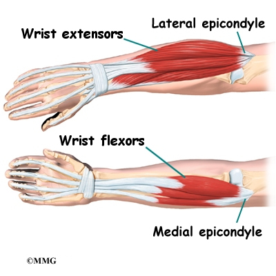 outside tendon hand diagram 79 trans am ac wiring elbow anatomy | eorthopod.com