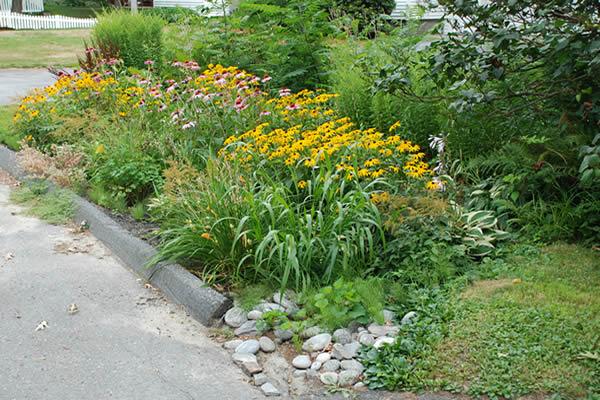 residential rain garden in leominster massachusetts