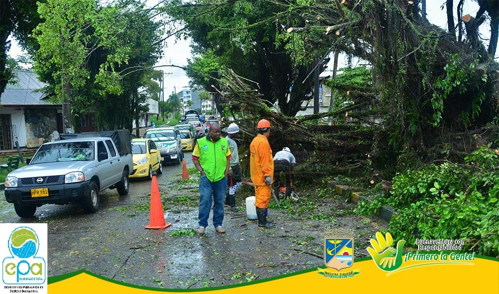 Establecimiento público ambiental se pronunció ante la denuncia del ciudadano que dice ser víctima de accidente de tránsito por la cíada de un árbol