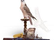 Katara International Hunting and Falcons Exhibition