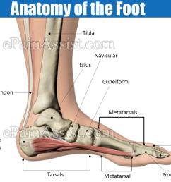 https www epainassist com images article images anatomy of the foot jpg [ 1200 x 900 Pixel ]