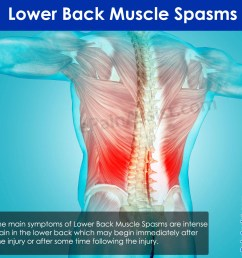 lower back muscle spasms causes symptoms treatment [ 1500 x 1500 Pixel ]
